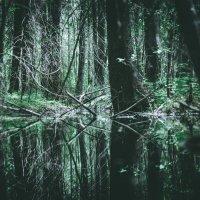 Сказочный лес :: Сергей Левинский