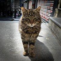 Стамбульский кот :: Андрей ТOMА©