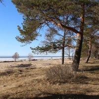 Финский залив. Апрель :: Наталья Герасимова