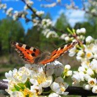 .Весна.. :: Сергей Фатеев