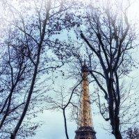 Эйфелева Башня окутан деревьями :: Георгий А