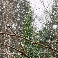 Сильный снегопад в Подмосковьи 14.04.2019 :: Генрих