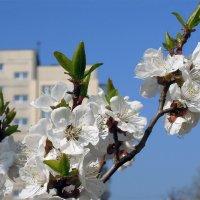 Весна в городе ) :: Тамара Бедай