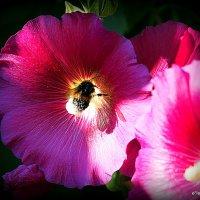 жажда нектара :: Олег Лукьянов