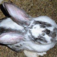кролик :: ольга хакимова