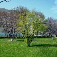 Весна в городе :: Анатолий Чикчирный