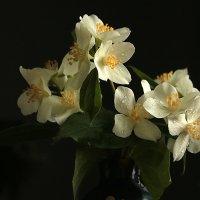 Скромный весенний букетик :: Светлана