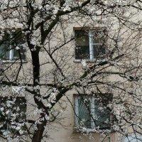 Наши окна - на втором :: Николай Семёнов