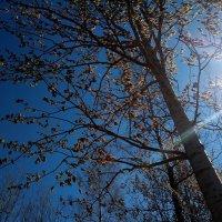 Солнца луч, неба синь :: Елена Павлова (Смолова)