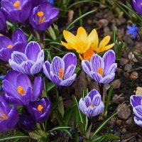 Весна... :: Татьяна