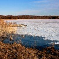Природа в  ожидании весны... :: Нэля Лысенко