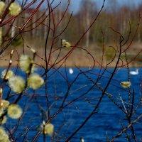 весеннее озеро :: Александр Прокудин