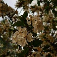 Весеннее цветение :: Наталья (D.Nat@lia)
