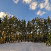 По осевшему снегу :: Сергей Цветков