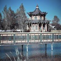 Китайский пруд. :: Андрий Майковский