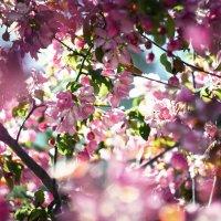 Цветочки :: sorovey Sol