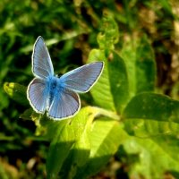 опять про бабочек...1 :: Александр Прокудин