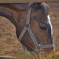 голова лошади :: Александра
