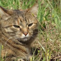 кот отдыхает :: константин Чесноков
