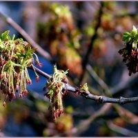 За окном весна :: Елена (ANEL-VP) .