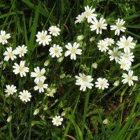 Апрель цветёт! :: Natalia Harries