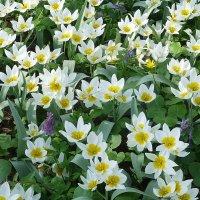 Светлая весна :: Лидия Бусурина