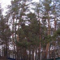лес :: константин Чесноков
