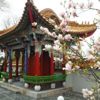 Китайский сад Цюрих Швейцария :: Swetlana V