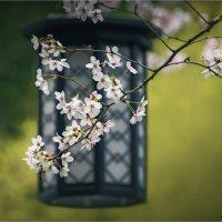 Япония в цвету :: Shapiro Svetlana