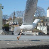 В свободный полет над площадью Свободы. :: Stas Hodalev