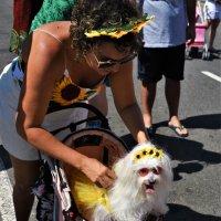 Рио в дни карнавала. :: Елена Савчук