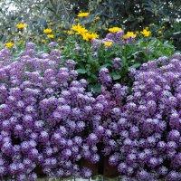 Мелкие цветы посчитайте сколько их :: Александр Деревяшкин