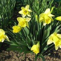 Весенний букетик в саду :: sm-lydmila Смородинская