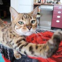 Моя кошка Буся :: Дмитрий Поздняков