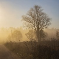 Утро туманное :: Светлана Карнаух