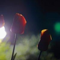 два света :: Юрий Гайворонский