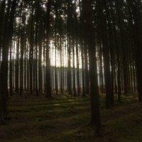 Весенний лес :: Aleksandr Ivanov67 Иванов