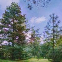 Весенний лес :: Татьяна Каримова