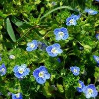Весенние цветочки :: Елена (ANEL-VP) .