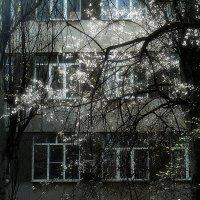 химфак университета по апрелю :: Николай Семёнов