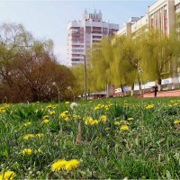 Весна :: Геннадий Худолеев