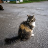 Евпаторийские котики :: Иваннович *