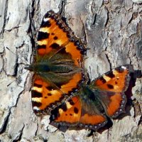 Бабочки :: Наталья Цыганова