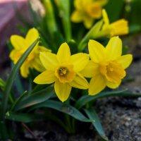 Весна... :: Зинаида Манушкина