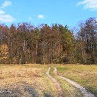 дорога в зеленый мир :: ВАСИЛИЙ САВЧЕНКО
