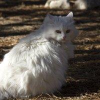 Кошки :: Валерий