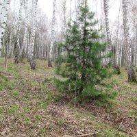 В весеннем лесу :: Galaelina ***