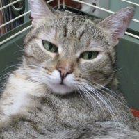 Кошка Маша,2 года. :: Зинаида