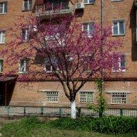 В ростовском дворике :: Нина Бутко