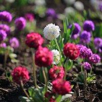 Весна :: Ninell Nikitina